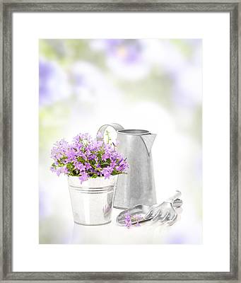 Campanula Flowers Framed Print by Amanda Elwell
