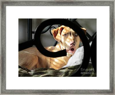 Can A Guy Get Some Sleep  Framed Print by Sandra Schroeder
