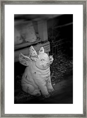 Can A Pig Fly? Framed Print