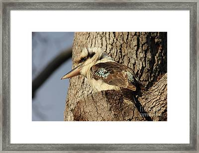 Can Anybody See Me? Framed Print by Jola Martysz