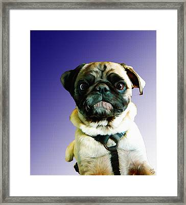 Can I Come Too Framed Print by Shere Crossman