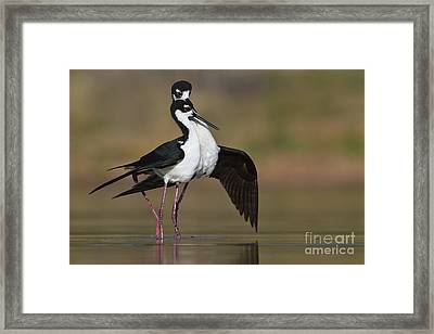 Framed Print featuring the photograph Can I Have This Dance by Bryan Keil