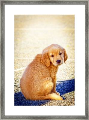 Can I Play Too Framed Print