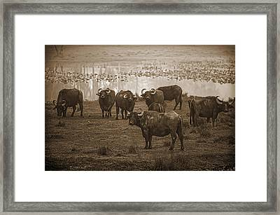 Can Not Roller Skate In A Buffalo Herd Framed Print by Frank Feliciano