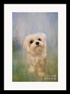 Domesticated Dog Framed Prints