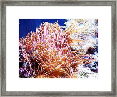 Can You Find Nemo Framed Print by Kelly Reber