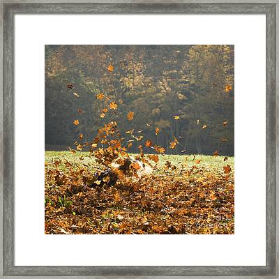 Framed Print featuring the photograph Can You See Me? by Carol Lynn Coronios
