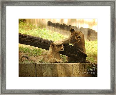 Can You See Me Now Framed Print by Olivia Hardwicke