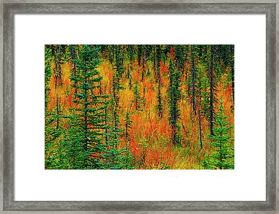 Canada, Alberta Autumn In A Meadow Framed Print by Jaynes Gallery