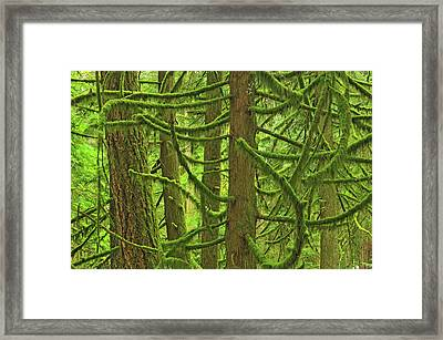 Canada, British Columbia, Mcmillan Framed Print by Jaynes Gallery