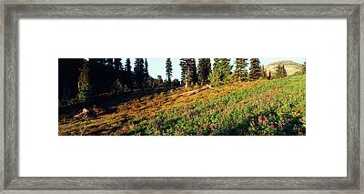 Canada, British Columbia, Squamish Framed Print