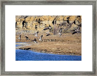 Canada Geese Along The Green River Framed Print