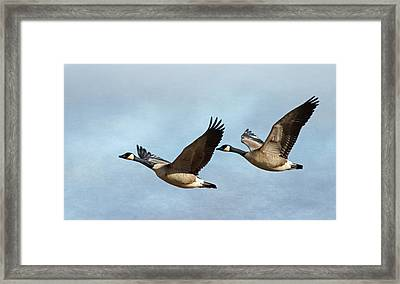 Canada Geese Framed Print by Angie Vogel