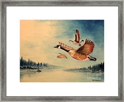Canada Geese Framed Print by Bill Holkham