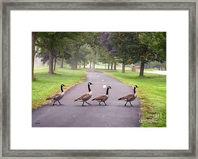 Canada Geese Four In A Row Framed Print
