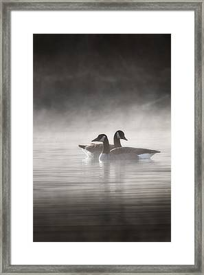 Canada Geese In The Fog Framed Print by Bill Wakeley