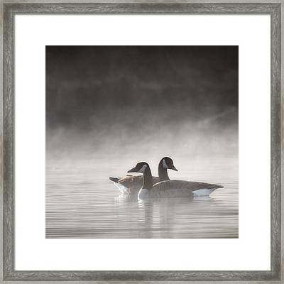 Canada Geese In The Fog Square Framed Print