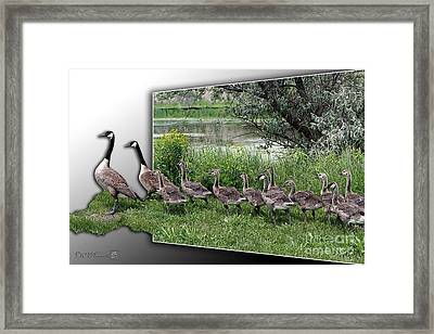 Canada Geese Framed Print by J McCombie