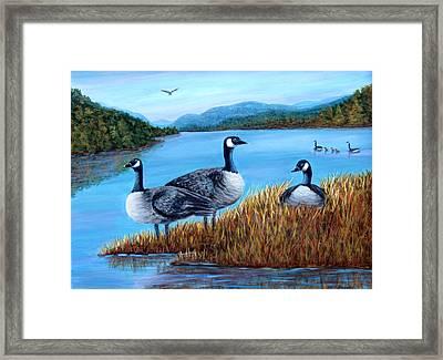 Canada Geese - Lake Lure Framed Print