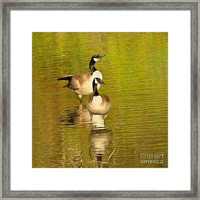 Canada Geese Pair Framed Print by Bob and Jan Shriner