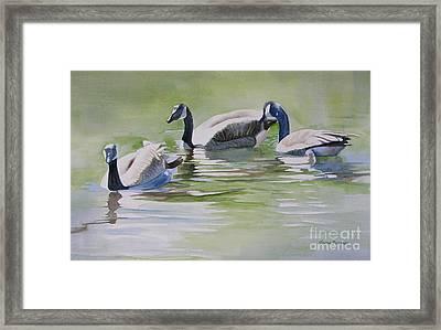Canada Geese Framed Print by Sharon Freeman