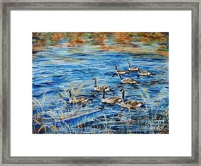 Canada Geese Framed Print by Zaira Dzhaubaeva