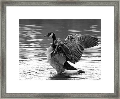 Canada Goose Black And White Framed Print