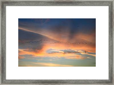 Canada Goose Flock Sunset Framed Print by John Burk