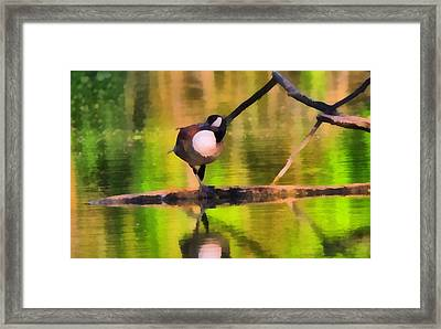 Canada Goose Spring Reflection Framed Print