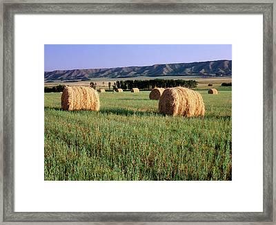 Canada, Manitoba, Rolled Hay Bales Framed Print by Jaynes Gallery