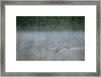 Canada, Quebec Canada Geese In Fog Framed Print