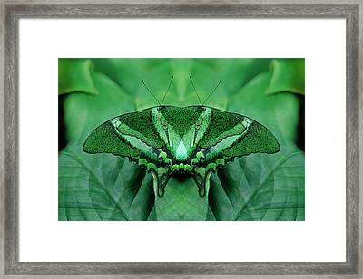 Canada, Victoria, Victoria Butterfly Framed Print by Jaynes Gallery