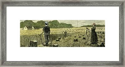 Canada Wheat Harvest In New Land 1880 Framed Print