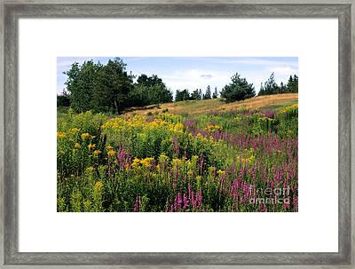 Framed Print featuring the photograph Canada Wildflower Meadow by Chris Scroggins