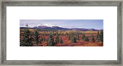 Canada, Yukon Territory, View Of Pines Framed Print by Panoramic Images