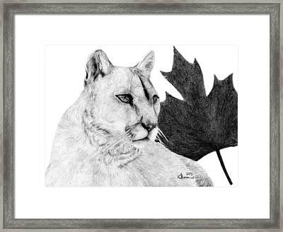 Canadian Cougar Framed Print by Kayleigh Semeniuk