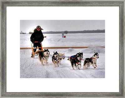 Canadian Dogsled Team Framed Print by Larry Trupp