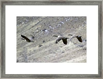 Canadian Flight Framed Print by Mike  Dawson