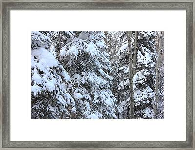 Canadian Forest - Winter Snowfall Framed Print