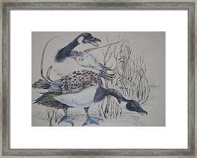 Canadian Geese Framed Print by Dorothy Campbell Therrien
