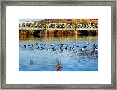 Canadian Geese Flock To The Old Arch Street Bridge  Framed Print
