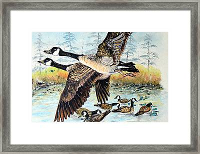 Canadian Geese Flying Framed Print
