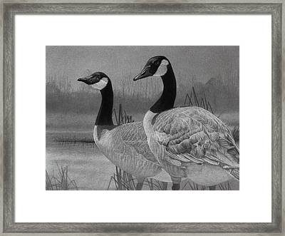 Canadian Geese Framed Print by Tim Dangaran