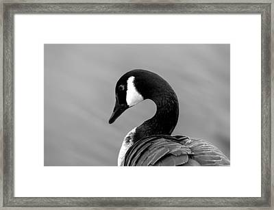 Framed Print featuring the photograph Canadian Goose In Black And White by Frank Bright