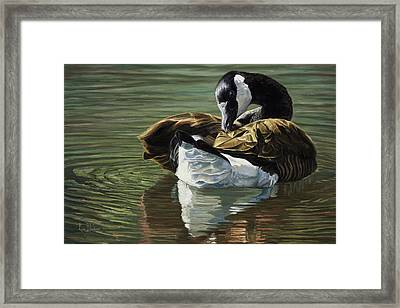 Canadian Goose Framed Print by Lucie Bilodeau