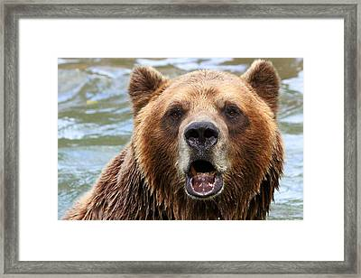 Canadian Grizzly Framed Print