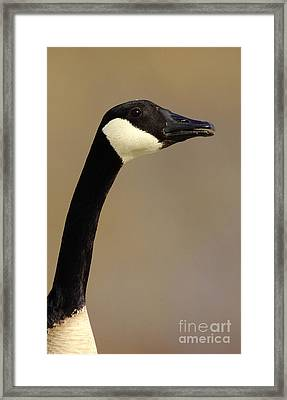 Canadian Head Framed Print by Robert Frederick