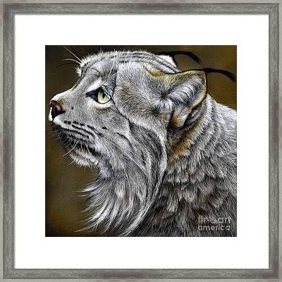 Canadian Lynx Framed Print by Jurek Zamoyski