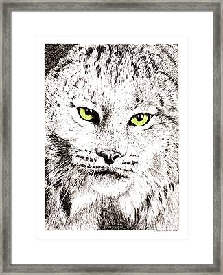 Canadian Lynx Framed Print by Paul Kmiotek