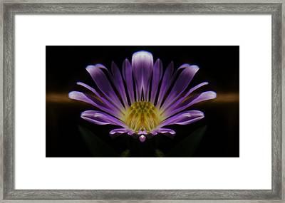 Canadian Purple Wildflower Framed Print by Barbara St Jean